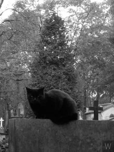 Jego wysokość Kot