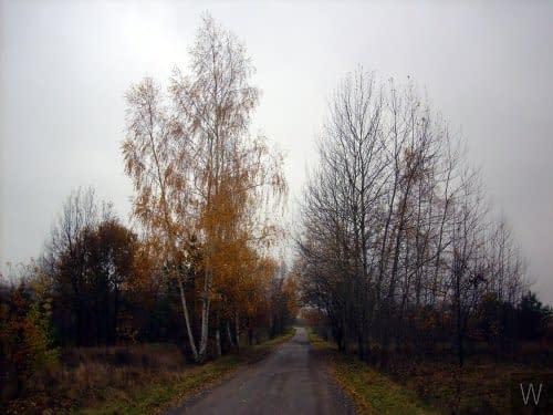 Znowu jesień...