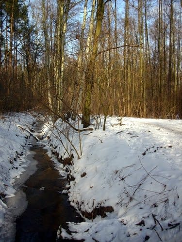 Rezerwat przyrody Łosiowe Błota